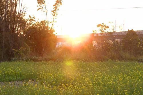 2009_0131龍井0108