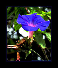 ~~~Good Morning Glory to All~~~ (~~~Gasssman~~~) Tags: friends vivid visualart beautysecret bej golddragon abigfave ultimateshot ysplix macromix goldstaraward spiritofphotography flickrsbestpics awesomeblossoms vosplusbellesphotos flickrsmasterpieces