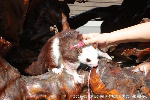 09春節小飛鼠Meiz的花蓮行 (12).JPG