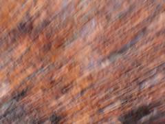 Plant Zoom Movement (manda_chan) Tags: blur speed movement long exposure zoom shutter rackthezoom