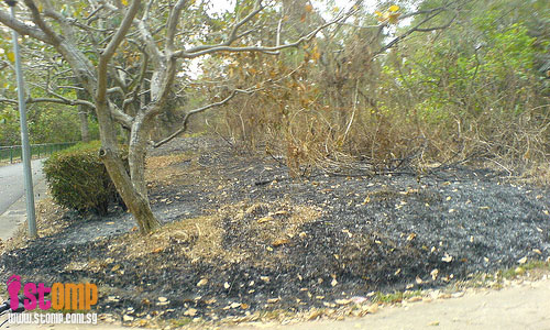 Look at the damage wreaked by S'pore's own bush-fire in Sengkang