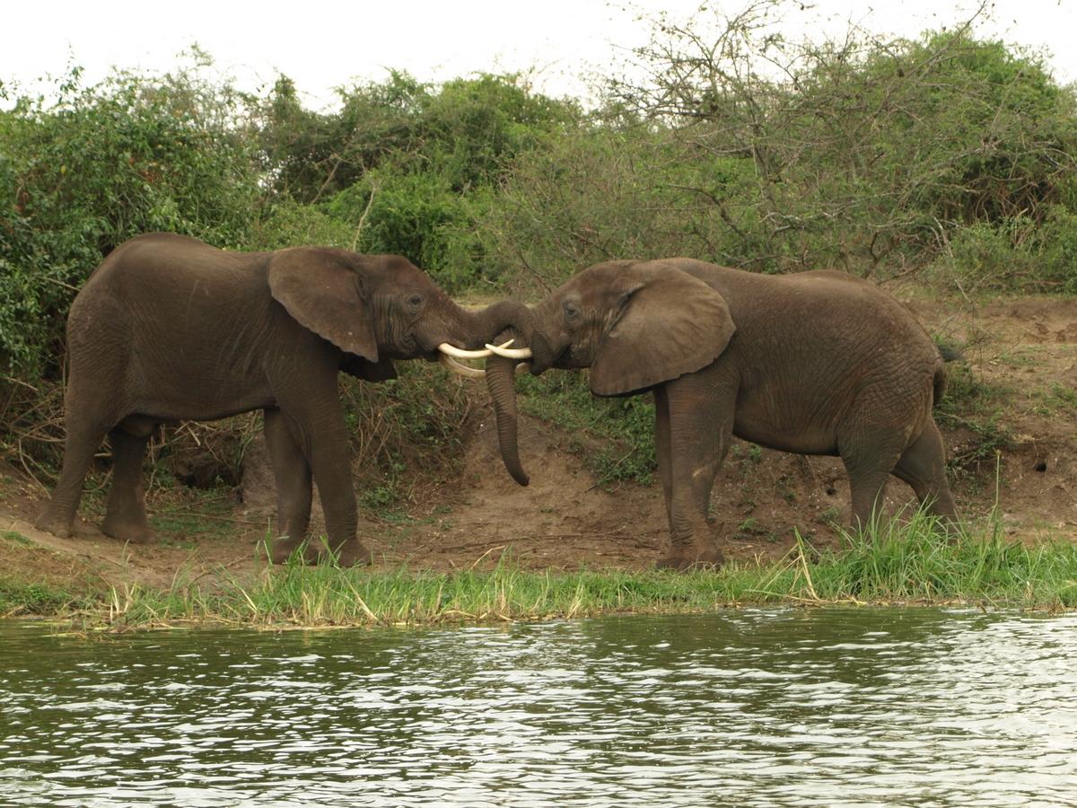 Elephant's conversation