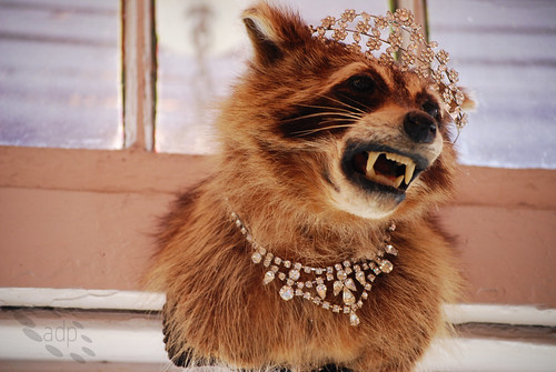 jewelled_raccoon[2009]