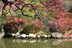 kairakuen (pink mochi) Tags: spring mito kairakuen umematsuri plumblossomfestival