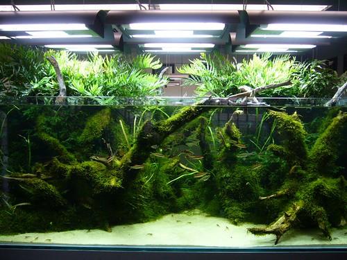 Aquarium Plants Australia : www.fishforum.com.au Australian Aquarium Forum ADA Australian ...