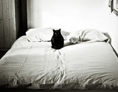 Le lit (-pauline-) Tags: light cat blackcat bed chat noiretblanc lumiere lit chatnoir pelote