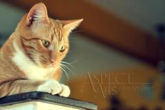2009 04 03 BFam 01 (Lisa of AspectArtsPhoto) Tags: family friends sun sunshine cat fun photography spring nikon april 28 aspect 2470 d700 aspectarts