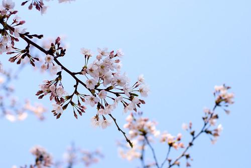 Ueno Park 13