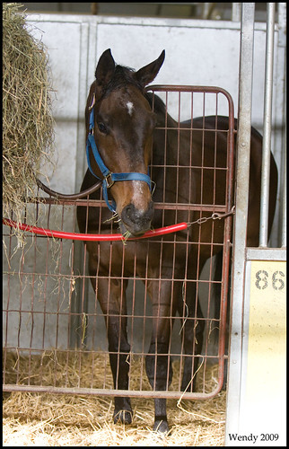 canoodler in stall