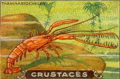 crustacés 7