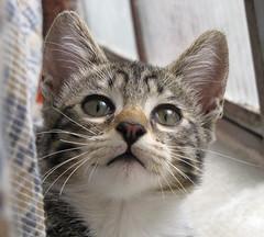 He wishes a Happy Mother's Day! (Mel1st) Tags: cat kat chat gata neko katze macska kot kats kedi koshka katt kato kissa kon meo ronronovisky paka kocka fato macka feles pussi negru chatul popoki qit kutjing miston maaoh mistú