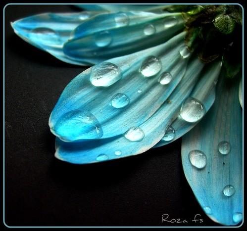 petals ....119