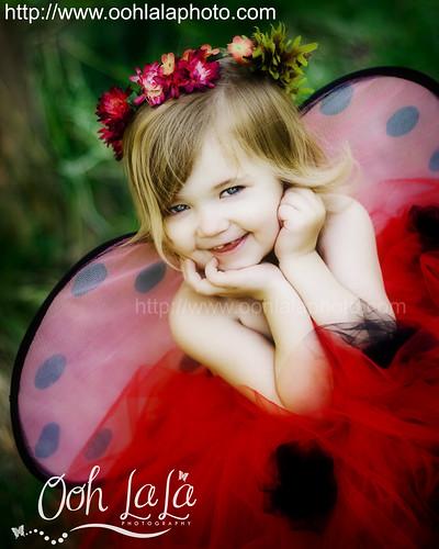 Lovely Ladybug!