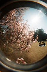 sakura fisheye (Vlien*) Tags: trees japan tokyo lomography fisheye cherryblossom sakura analogue hanami picknick analoog shinjukunationalpark