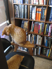 bookstore kittehs