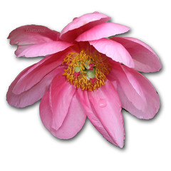 Floating Flower!
