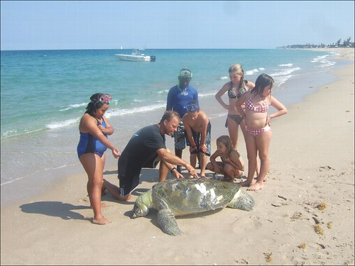 Dead Green Sea Turtle Discovery