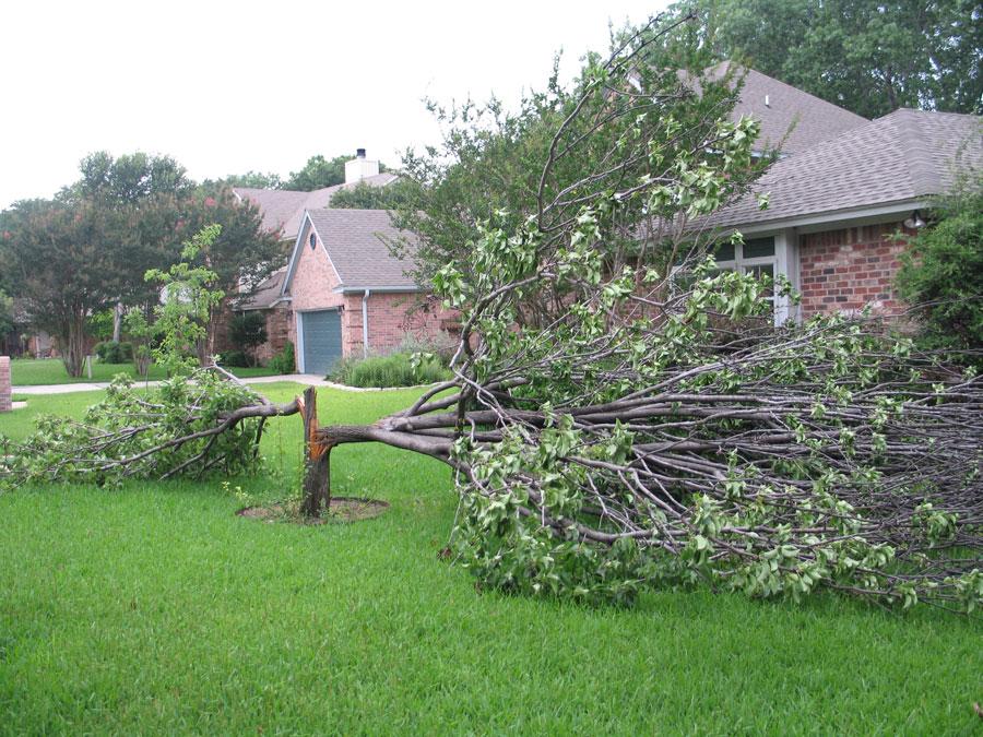storm tree