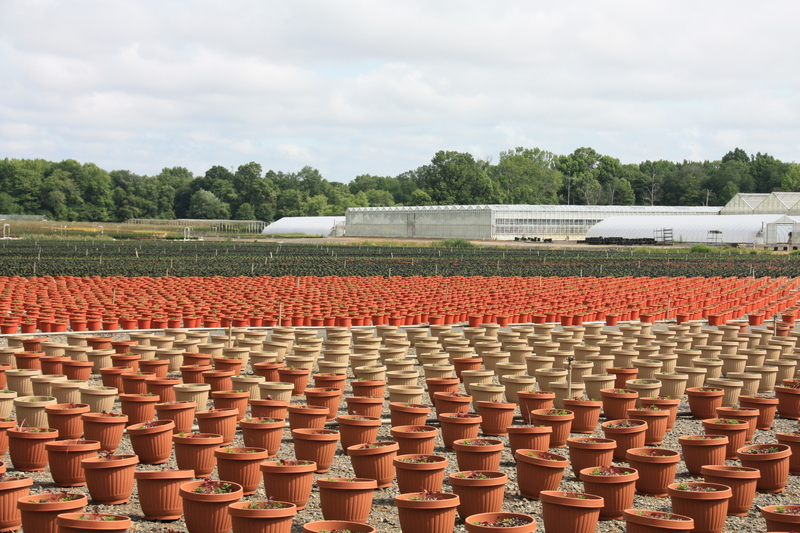 Flower Pot Fields