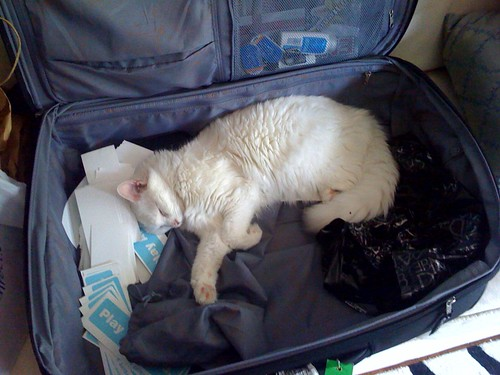 My old, trusty Samsonite (and my cat Ludwig)