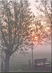 A few  Quiet Moments (mayaplus) Tags: morning trees red sun colour tree nature sunrise landscape dawn countryside early nikon belgium brugge earlymorning meadow dew fields eco contrejour damme d90 impressedbeauty naturesfines theunforgettablepictures thenaturesgreenpeace