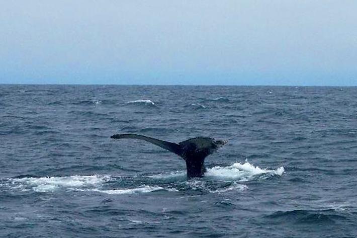 050110_humpbackwhale