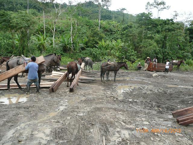 Trabajadores transportando madera. La Canela, Ecuador.