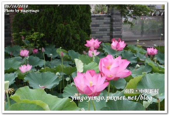 中興新村99年蓮花I2186