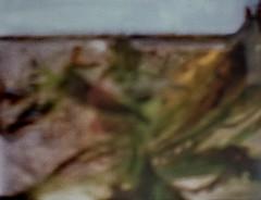 Aquarium - Undine - Aktion: Glas Wasser Wrfel ~ Glass Cube Water - im Wasser Spiegel - in the Mirror (hedbavny) Tags: vienna wien reflection art film water glass analog 35mm aquarium austria mirror sterreich lomo lomography wasser underwater spiegel kunst diary pflanze manipulation note diana cube mementomori analogue bachmann rotten transition decomposition blatt spiegelung tagebuch glas wrfel aktion vanitas unterwasser undine verfall leafe verwelkt bearbeitung aquaticplant notiz wasserpflanze hydrophyte wasserspiegel bergang ingeborgbachmann aktionismus scheintod transitio dianamini hedbavny ingridhedbavny