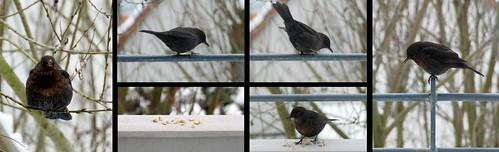 Storybird :-)