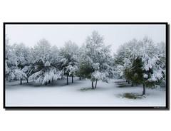 Invierno (asinquecualo) Tags: winter naturaleza white snow cold tree verde green textura blanco nature arbol hiver nieve invierno neige blanc froid frio