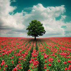 Tref (Juan B.E.) Tags: flowers shadow sky flores tree arbol juan sombra cielo idream zarafa theunforgettablepictures superstarthebest lightiq niceshotmosaic9