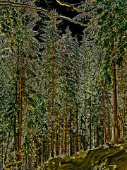 Subtle charm (haikus*) Tags: trees forest colours charm subtle solarisazion