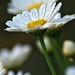Marguerite White Photo 4