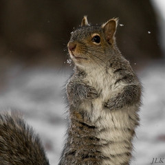 light snow this morning (LastBestPlace) Tags: winter wisconsin squirrel searchthebest waukesha soe naturesfinest blueribbonwinner supershot abigfave platinumphoto anawesomeshot aplusphoto citrit platniumphoto goldstaraward earthanditsincredibleanimals thecelebrationoflife