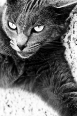 Diabolik (Stefano Mazzoni) Tags: winter bw italy white black animals cat march nikon italia country bn explore campagna felino inverno gatto bianco nero marzo animali d300 casperia blackwhitephotos esplora stefanomazzoni nikond300 stefano485 diabolitk