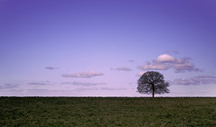 Solitary tree at Sunset (epcp) Tags: sunset tree landscape 350d bath somerset 28135mm tlc otw freephotos omot distinguisedpictures beyondourtime