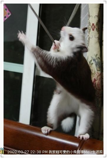 09年二三月小飛鼠Meiz生活照 (27)