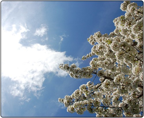 Blossom touching the sky