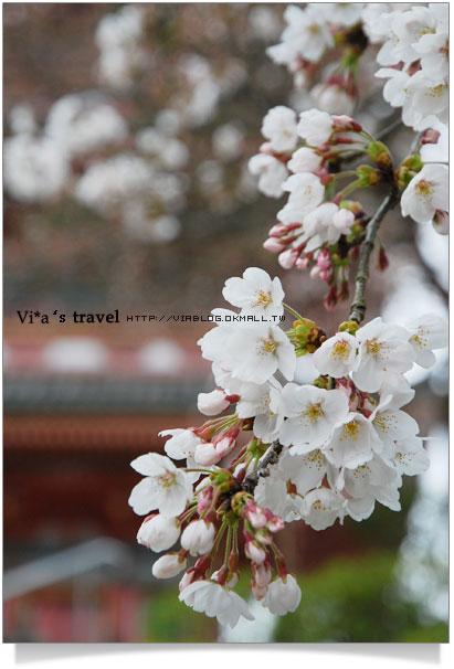 【京都春櫻旅】京都旅遊景點必訪~京都清水寺之美京都清水寺19