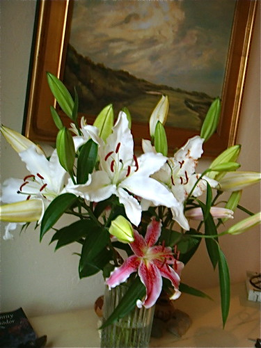 ecuador-floral-information