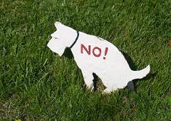 No! (Karol A Olson) Tags: