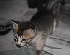 Little cat in the dark (air maxx) Tags: china party wallpaper hk dog pets cute girl beautiful japan cn cat dark hongkong big model good quality