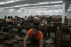 Sorting Dried Tobacco Leaves