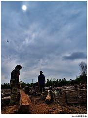 Olympus E1 ZD ED 12-60mm SWD - Telupid Chainsaw Wood Work (sam4605) Tags: sun ed log chainsaw samsung olympus matahari zd s760 1260mm sam4605