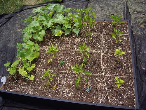 Garden Box #4 6/18/09
