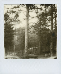 polaroid week spring 2010 / day 1 (maplesyruponly) Tags: polaroid colorado boulder deer roidweek silvershade px600ff polaroidweekspring2010
