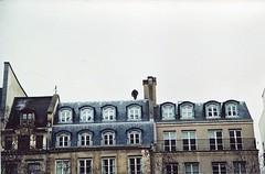 l'homme sur le toit (Adele M. Reed) Tags: paris france film rooftop 35mm canon eos kodak 200 homme