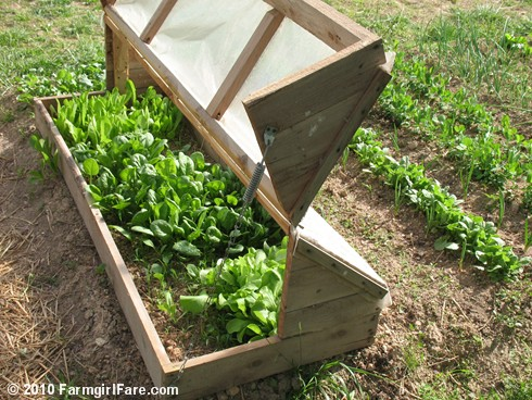 Amish Cold Frame  5
