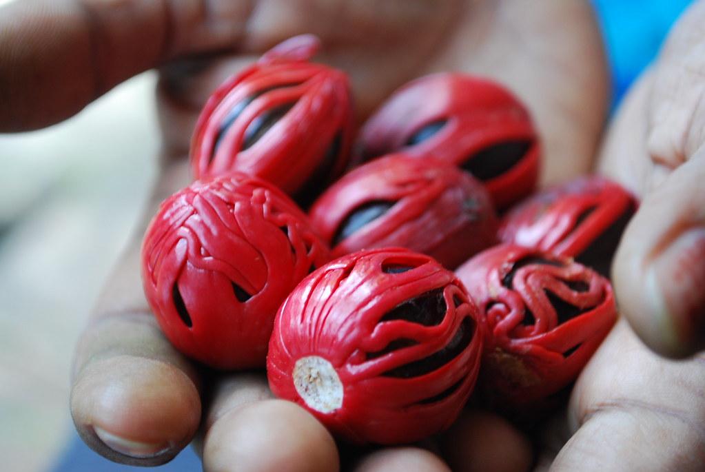 Mace and Nutmeg: Cochin, India